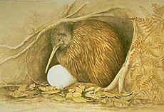 Kiwi Bird with Egg