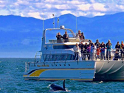 whale watching Victoria BC