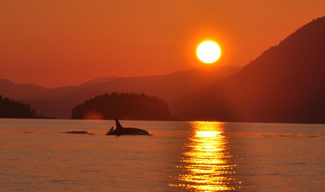 Orcas Island Crystal In Spa